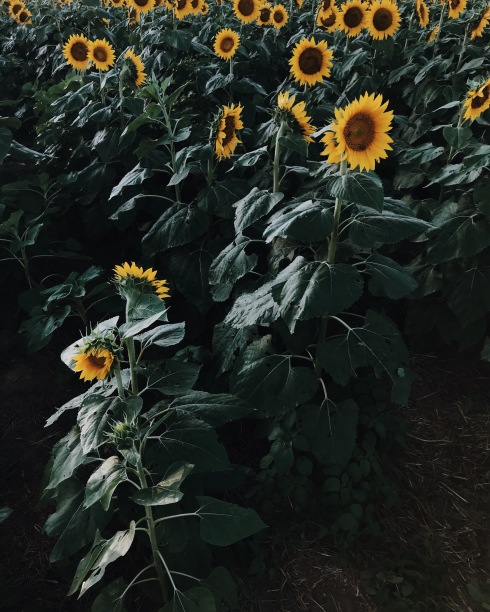 Processed with VSCO with m5 preset Processed with VSCO with j2 preset
